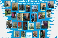 Hunsley-Primary-Trees