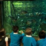 EYFS Tropical World (14)